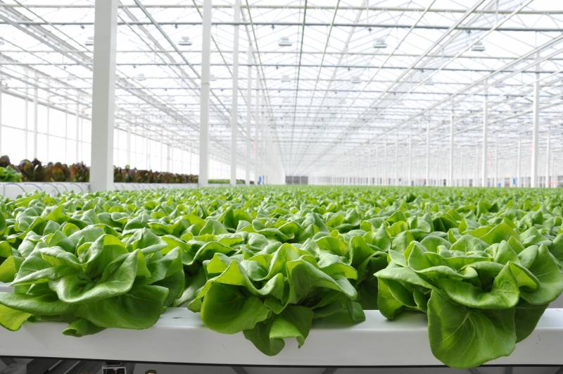 "The Star Group planning expansion of ""living lettuce"" greenhouse project"