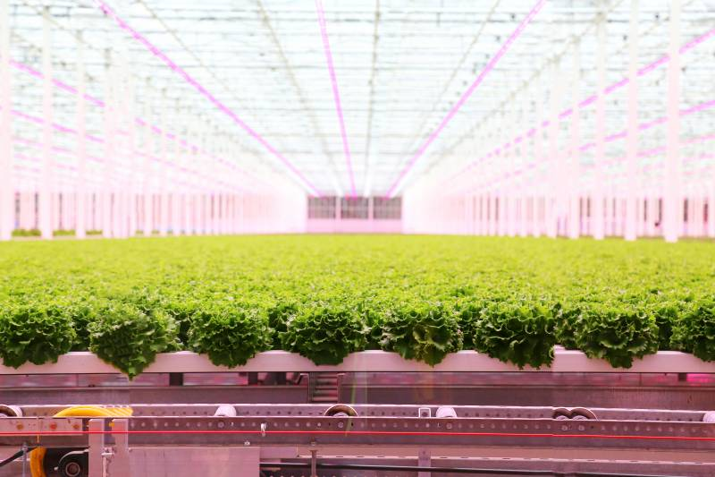 "Star Group planning expansion of ""living lettuce"" greenhouse project"