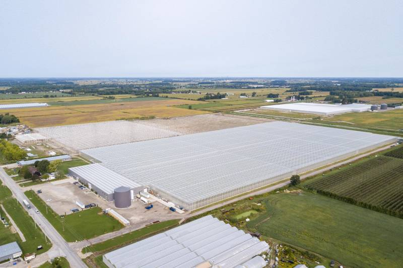 Mucci Farms Strawberry Expansion Drone Image