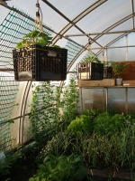 Quebec invests $5M in sustainable greenhouse gardens in the North
